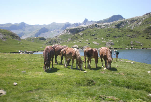 Midi-ibon-Anayet-caballos-JavierSC