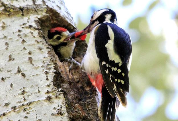 Buitres, quebrantahuesos... ¿Conoces las aves que hay en el pirineo? | Blog  Aramon