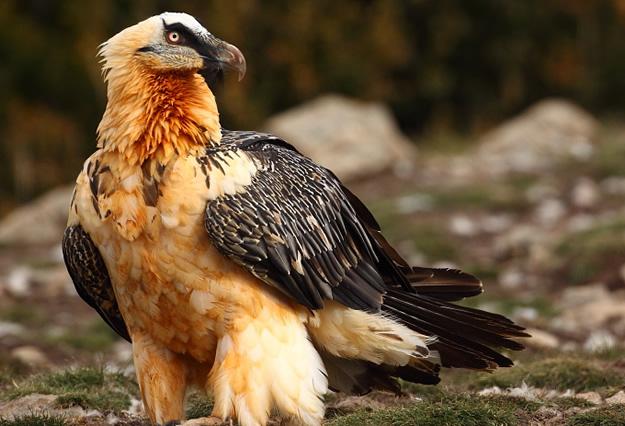 ¿Conoces la fauna autóctona de Aragón?