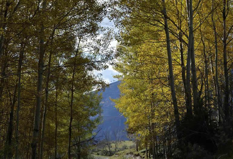 Imagen tomada en Liri, en el valle de Benasque. Autor: Jorge Mayoral