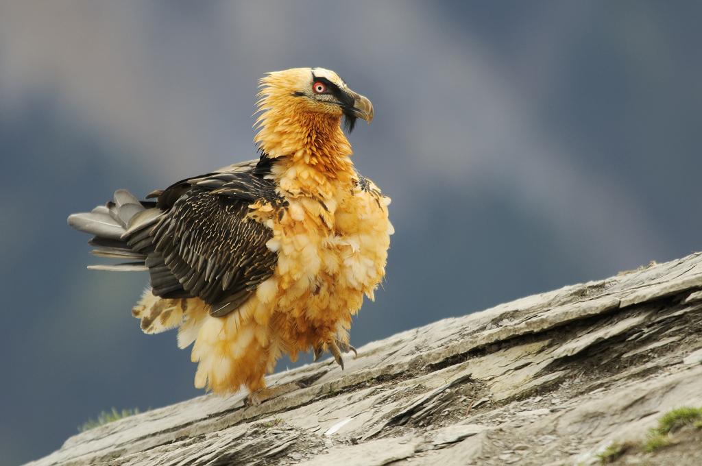 Animales del Pirineo: mucho por disfrutar