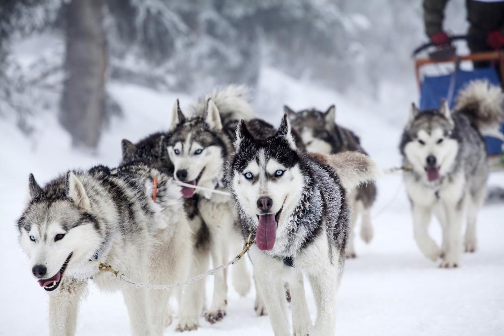Paseos en trineo con perros: ¿dónde hacerlo en los Pirineos?