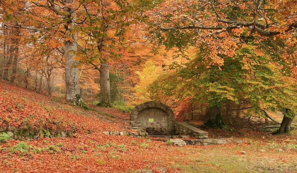 Los bosques de otoño más espectaculares