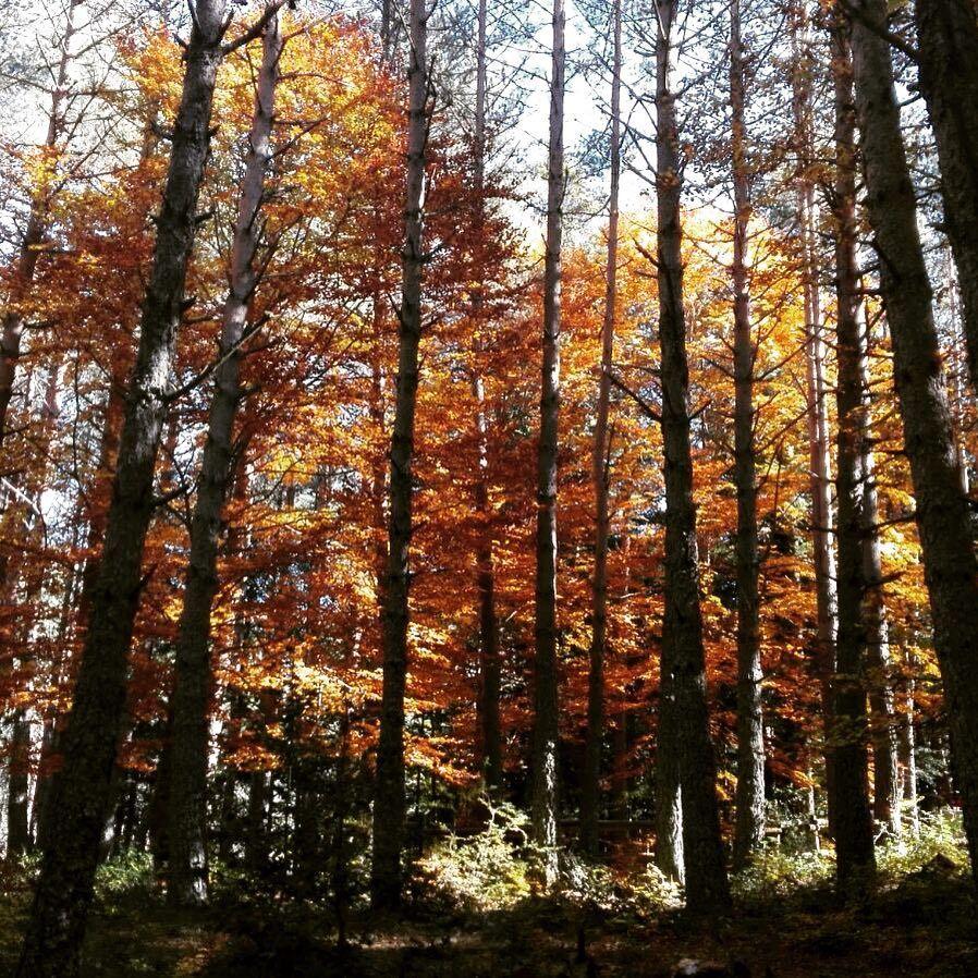 Excursiones de otoño en Aragón