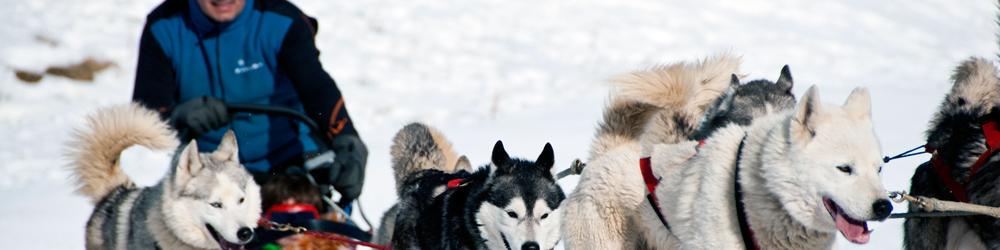 trineo de perros cerler